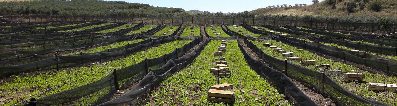 Terreni a coltura